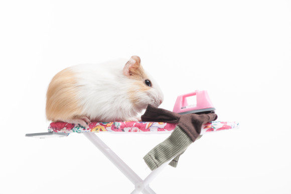 Hamster image for copywriting clients are usually wrong post